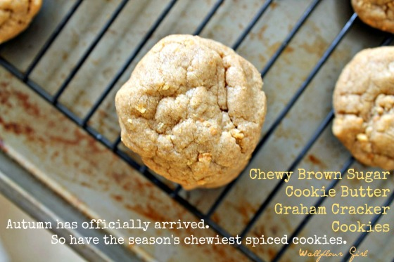 Brown Sugar Cookie Butter Graham Cracker Cookies 3--100813