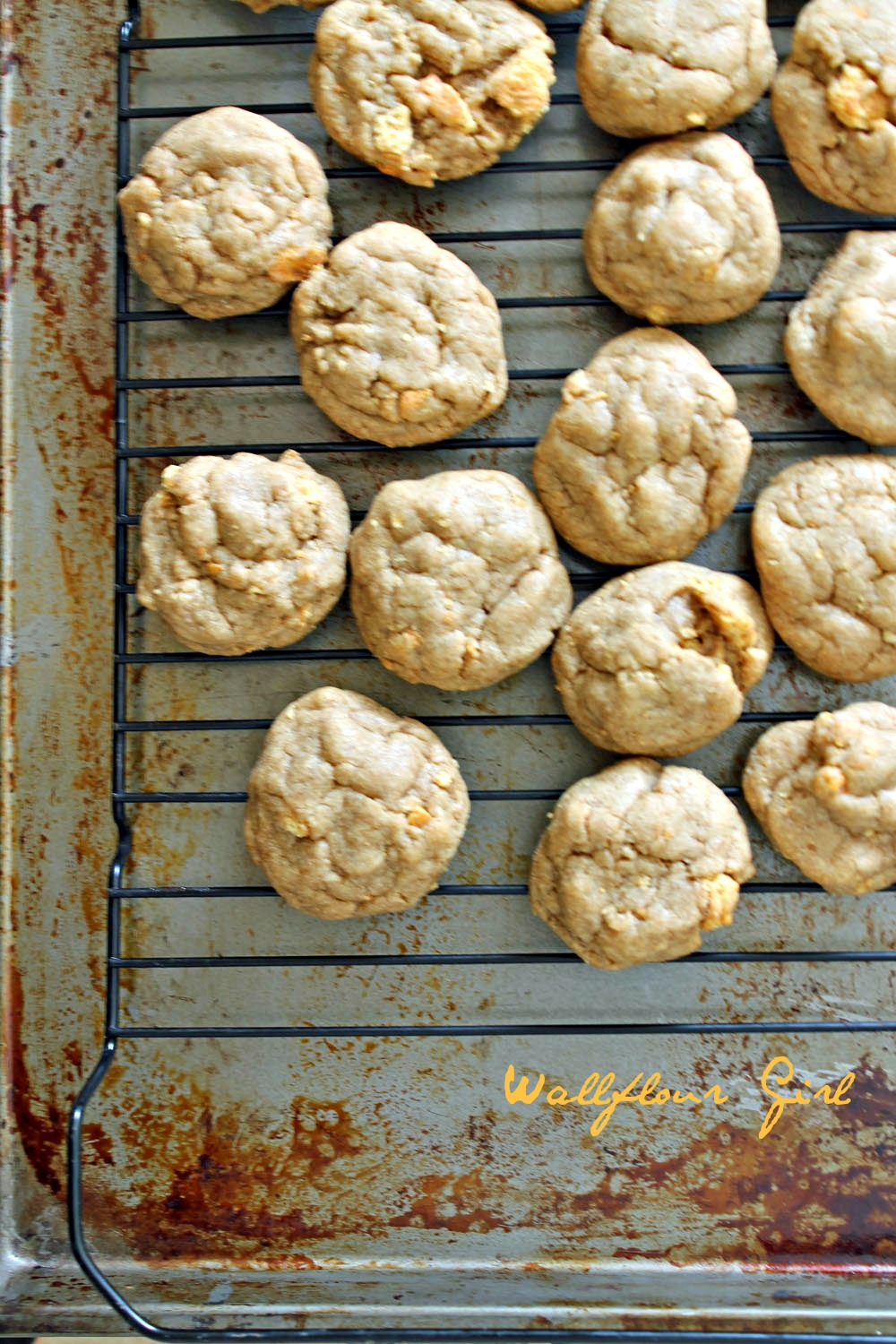 Brown Sugar Cookie Butter Graham Cracker Cookies 6--100813